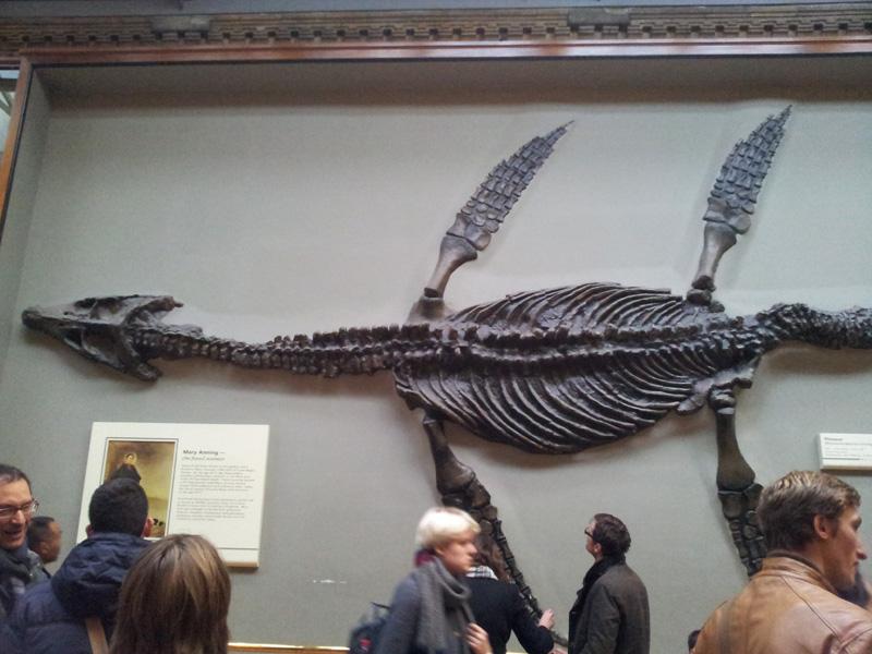07 dinosauri